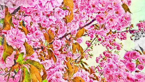 4K Spring Tree in Full Pink Bloom Handdraw Art Animation
