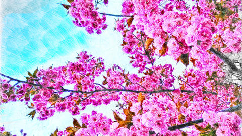 4K Pink Blossoming Springtime Tree in Full Bloom Handdraw Art Animation