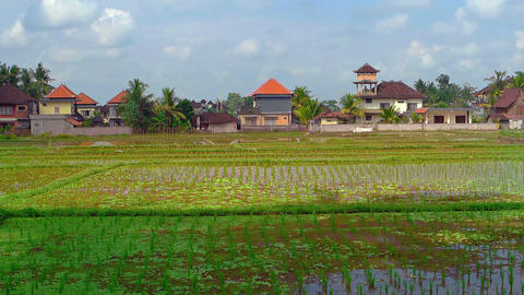 Modern Houses Fronting a Rice Plantation in Bali. Indonesia Footage