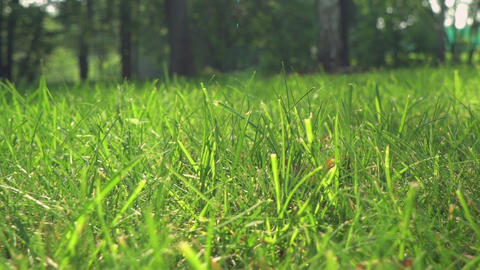 Lawn in the yard with trees Filmmaterial