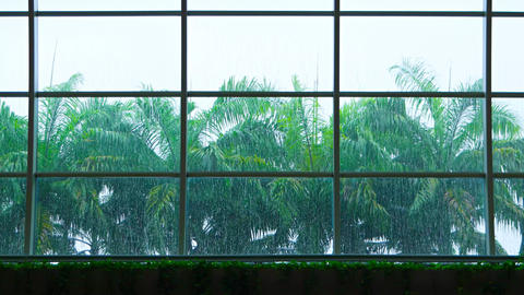Rain and Palm Trees through the Glass a Greenhouse's Glass Roof. Video 4k Footage