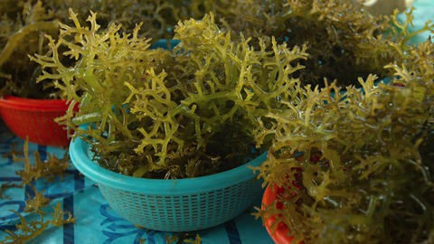 Edible Seaweed at a Public Market on Borneo. Video 4k Footage