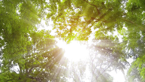 Rays of Sunshine Filtering through Overhanging Branches and Leaves. Video 4k Footage