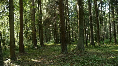 forest at summer, panorama Live Action