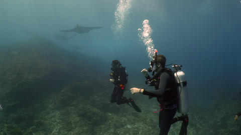 giant manta rays swims over coral reef with SCUBA DIVERS watching Live Action