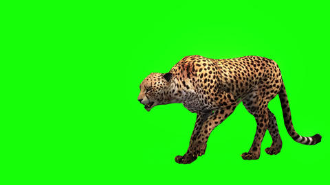 413 3D animated Cheetah waks and other movements Animation