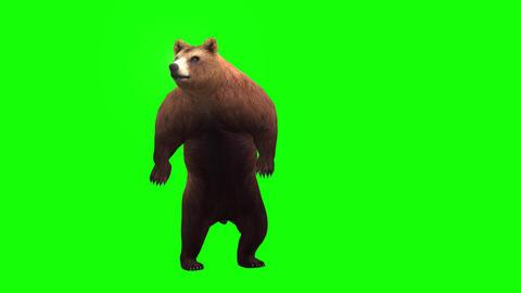 412 3d animated bear look around ans walks Animation