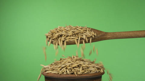 Slow motions. Oats grains get enough sleep from a wooden spoon on a pile of seed Live Action
