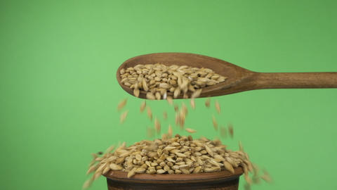 Slow motions. Barley grains get enough sleep from a wooden spoon on a pile of Live Action