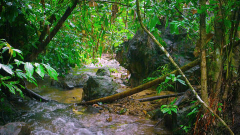 Tourist Hiking along a Tropical Mountain Stream on a Rainy Day. with Sound Footage