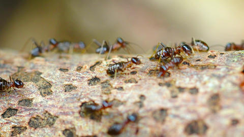 Colony of Termites. Swarming on a Deadfall Branch Footage