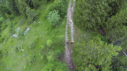 Aerial: Shot of two people hiking in the mountain forest Footage