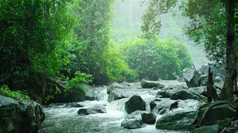 Phnom Kulen National Park on a Rainy Day. with sound. Video 3840x2160 Footage
