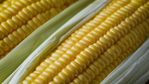 Close up shot fresh sweet corn, with natural sunlight, high vitamin fruit, and vegetable GIF