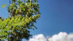 Green lush bracken Moorland scenery stock footage Live Action
