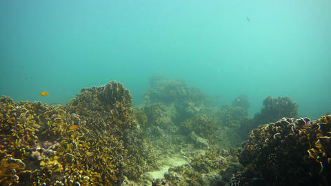Tropical Underwater Habitat with Fish and Coral. UHD video Footage