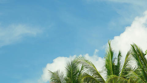 Tops of tropical palm trees against the sky with clouds. Video UltraHD Footage