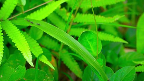 Formic road on grass leaf. Video UltraHD Footage