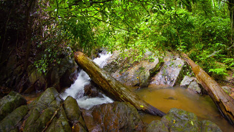 Stream in tropical forest. Rainy day. UltraHD video Footage