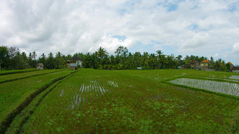 Rice fields and the homes of local residents. Indonesia. Bali. Ubud Footage