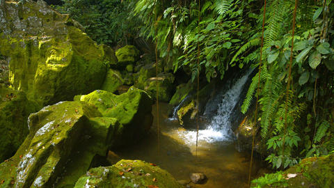 Natural waterfall tumbles playfully over rounded. mossy rocks under ferns Footage
