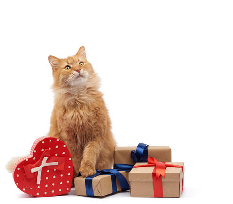 funny adult ginger cat sitting in the middle of boxes wrapped in Fotografía