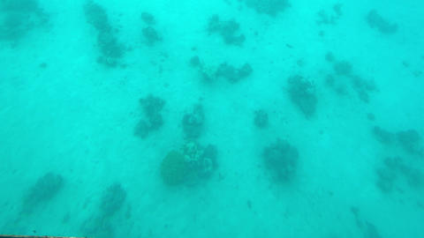 Eilat, Israel - at the depths of the Red Sea through the porthole part 6 Live Action
