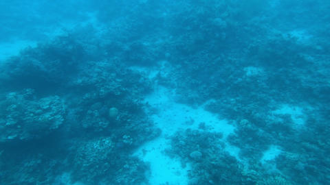 Eilat, Israel - at the depths of the Red Sea through the porthole part 8 Live Action