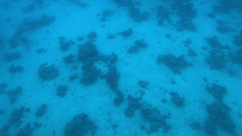 Eilat, Israel - at the depths of the Red Sea through the porthole part 5 Live Action