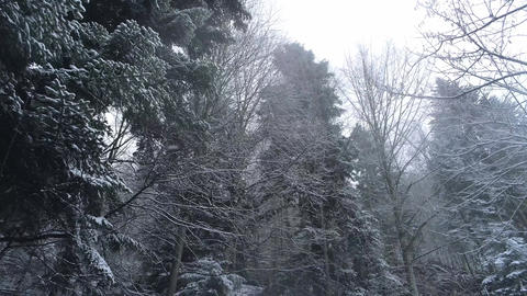 Amazing winter scenery in the forest with snow capped trees Stock Video Footage