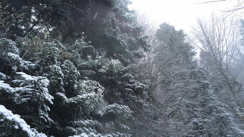 Amazing snow-capped fir forest in the alps - romantic winter scene Live Action