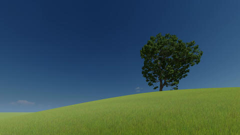 3d green picture. 3d render. One tree on a green hill and clear sky Live Action