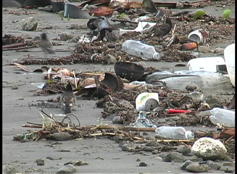A medium-shot of birds scavenging piles of garbage that... Stock Video Footage