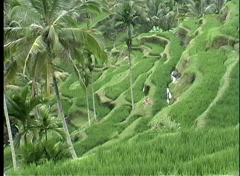 A birds-eye view of a terraced rice paddy on a hillside... Stock Video Footage
