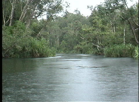 Point-of-view shot of the Amazon River flowing along a tree covered shoreline Footage