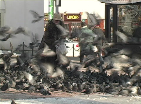 A person feeds flocks of birds on a street in Bosnia Footage