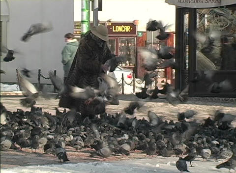 A person feeds flocks of birds on a street in Bosnia Stock Video Footage
