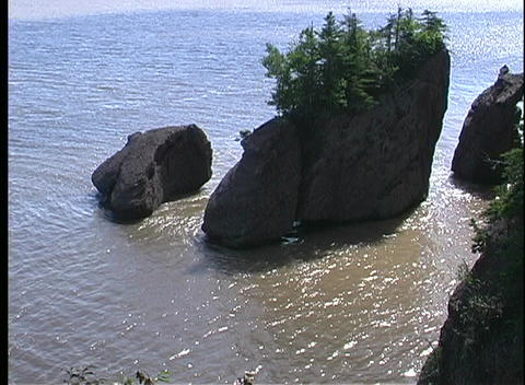 Small pine trees grow out of large rocks in the Bay of Fundy Footage