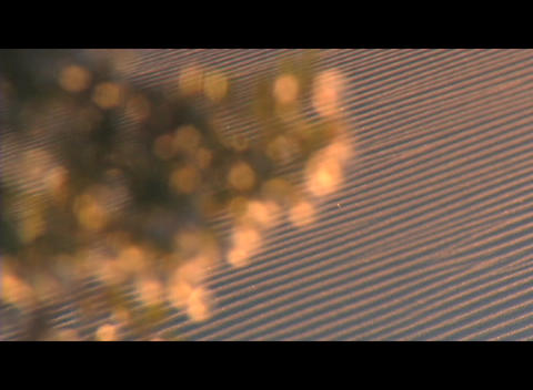 A flowering tree reflects golden light with a tilled farm... Stock Video Footage