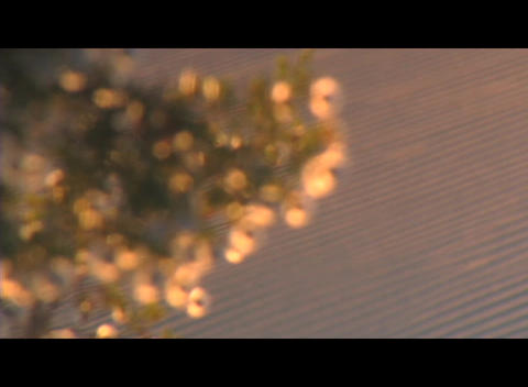 A flowering tree reflects golden light with a tilled farm field in the distance Footage