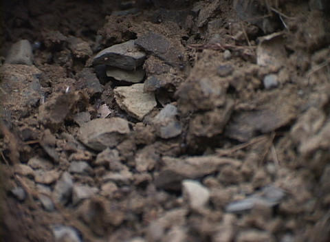 A close-up look at ants investigating a section of road... Stock Video Footage