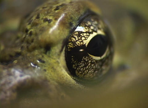 A close-up shot of green skin and a large brown eye Stock Video Footage