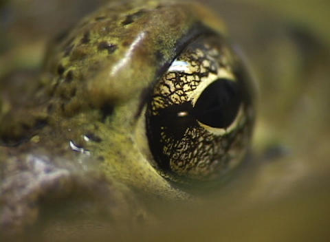 A close-up shot of green skin and a large brown eye Footage