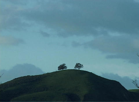 The silhouettes of two trees stand on a hill as the... Stock Video Footage