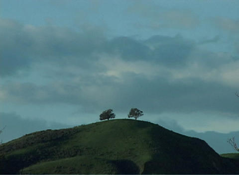 The silhouettes of two trees stand on a hill as the clouds rush over-head Footage