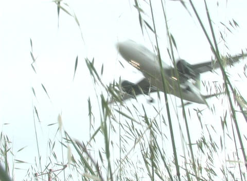 Blades of grass blow in the breeze as a plane passes by Footage