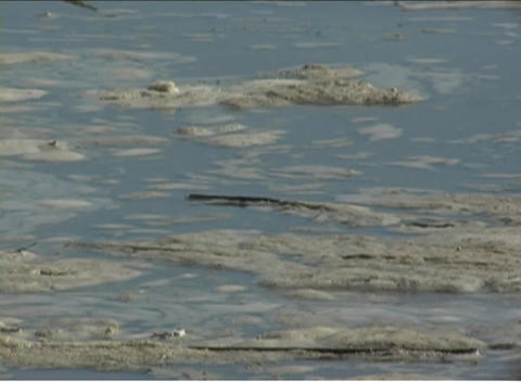 Debris and mud float on the surface of a river Stock Video Footage