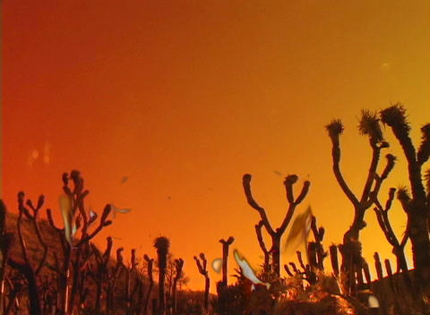 Flames rise from large cactus in the desert Footage