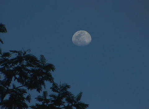 Branches of a tree are silhouetted against a blue-black sky with a pale full moon Footage
