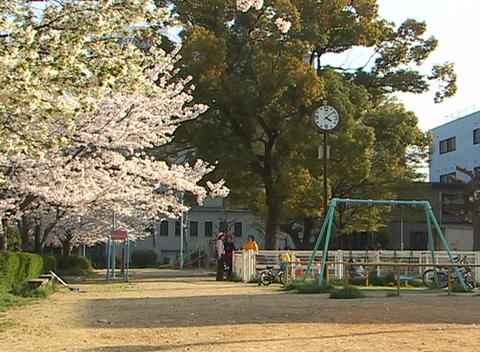 Large cherry tree in bloom and a large clock on a pole stand watch over children playing at a playgr Live Action